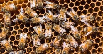 Leipzig Opera Bees