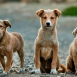 dogs-984015_960_720