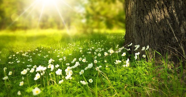 Spring picture of flowers in a field